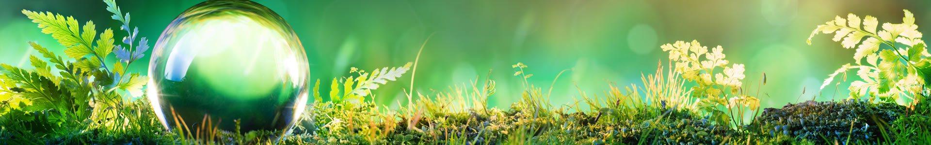 Novidades do Meio Ambiente, Consultoria Ambiental